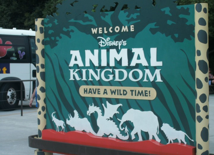 Opening Date for Starbucks at Disney's Animal Kingdom Confirmed