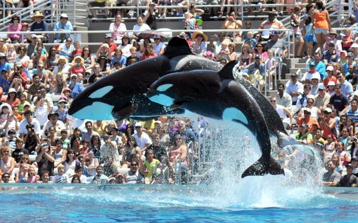 SeaWorld To End Killer Whale Shows in San Diego
