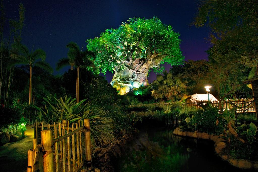 Tree of life at night at Disney's Animal Kingdom