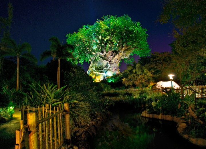 Animal Kingdom Nighttime Events Begins Memorial Day Weekend to Include Interim Jungle Book Show