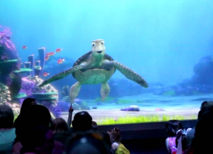 More Characters Join Crush at Turtle Talk With Crush at Epcot