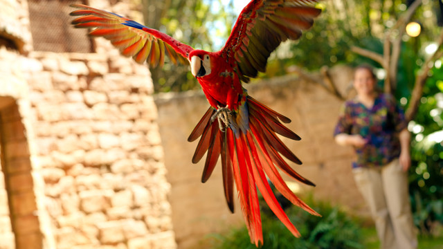 Flights of Wonder parrot