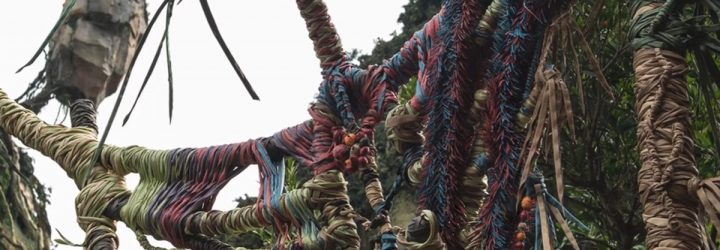 Episode 115 – We Read Poor Reviews of Pandora – The World of Avatar at Disney's Animal Kingdom!
