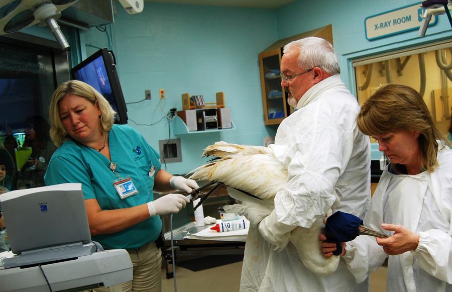 Animal Kingdom veterinary treatment room
